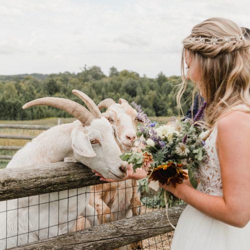 south pond wedding farm animals